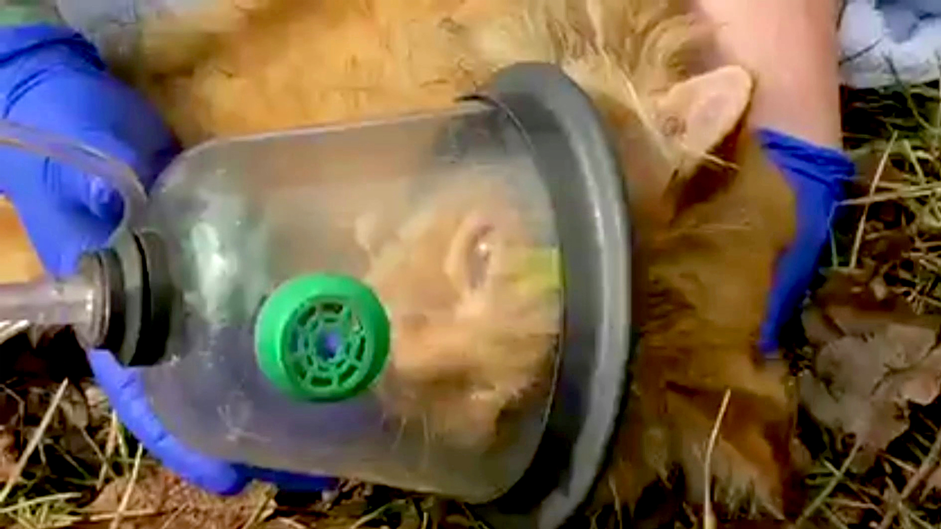 VIDEO: Fur-st Aid Kit: Firefighters Use Oxygen Mask To Save Cat's Life
