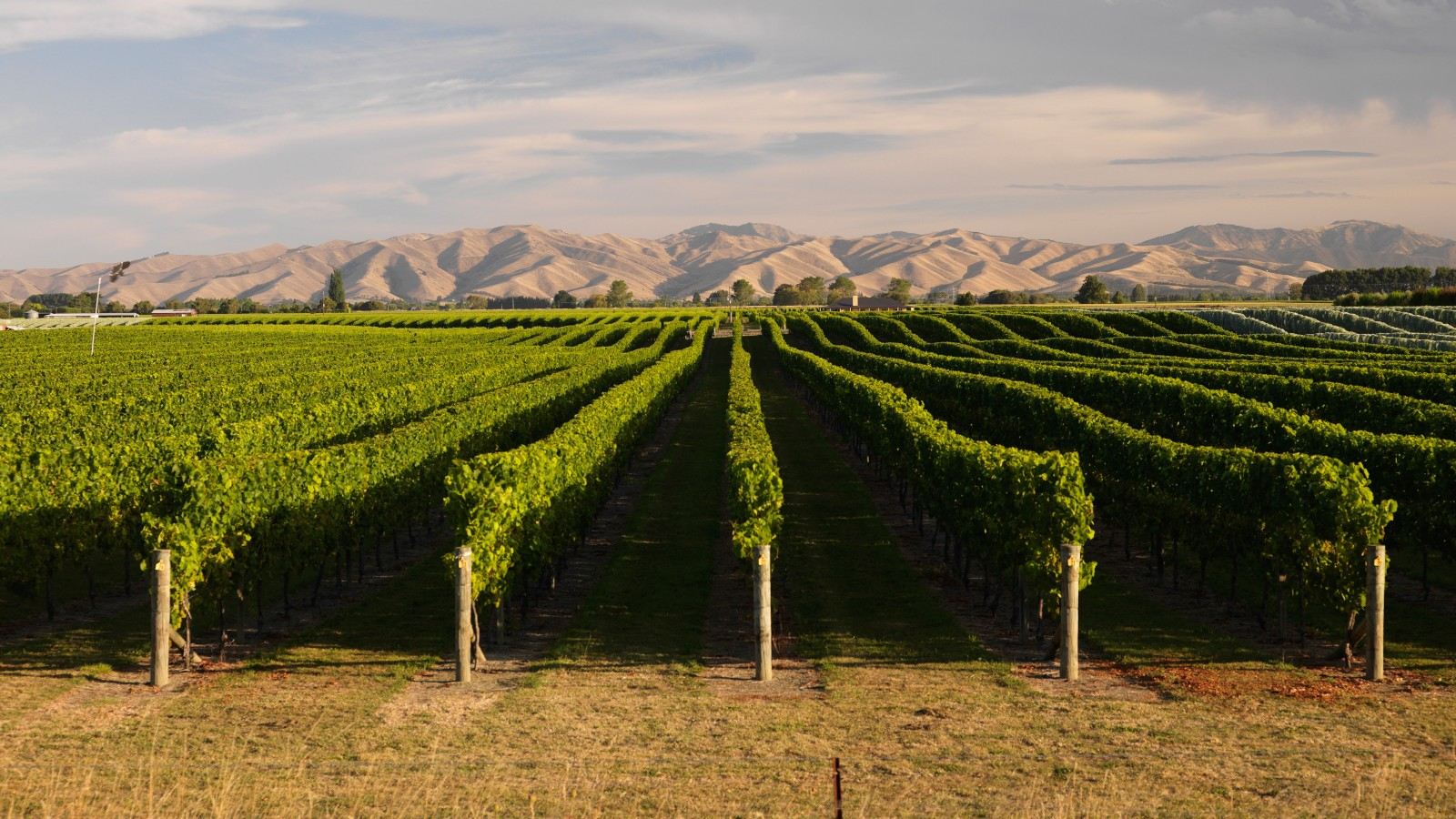 Vine Of The Times: Premium Winemaker Taps Trellis' Wine IQ