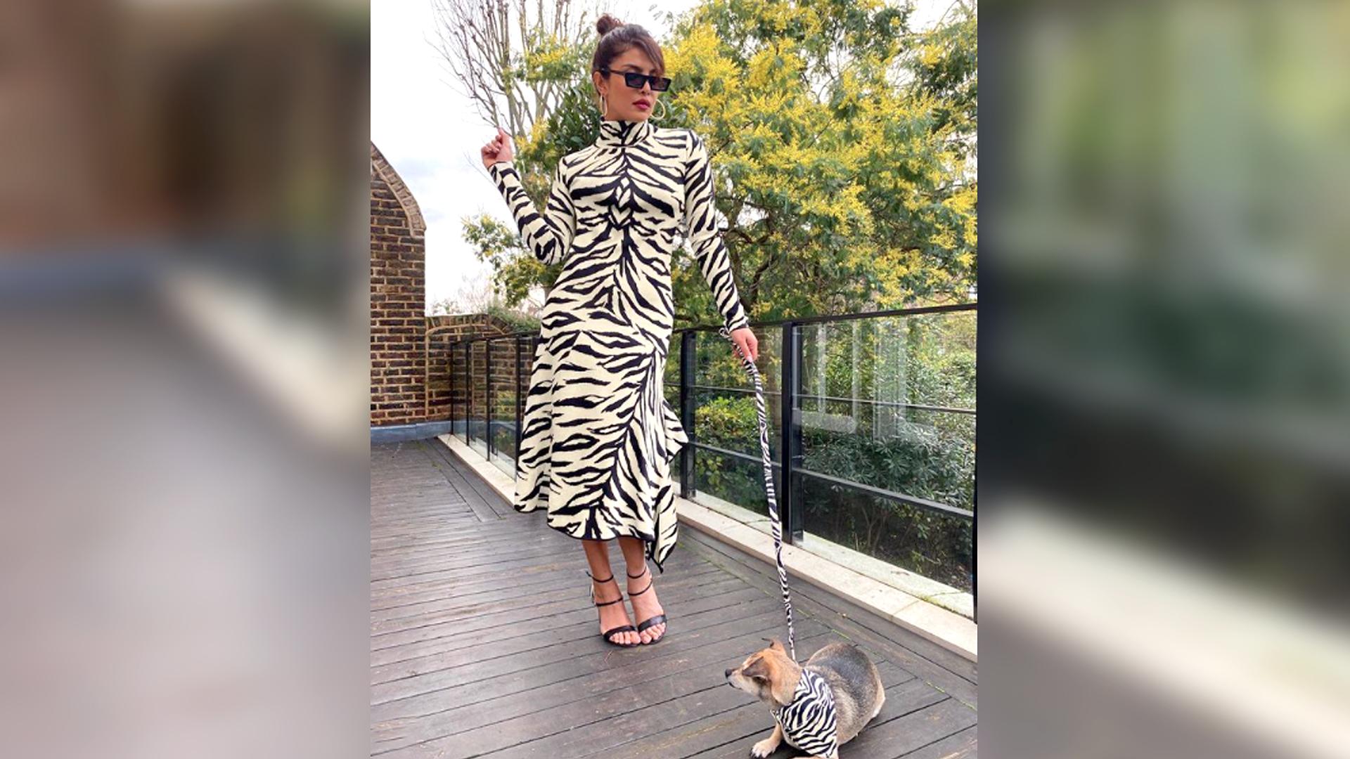 Priyanka Chopra takes pet fashion to a whole new level