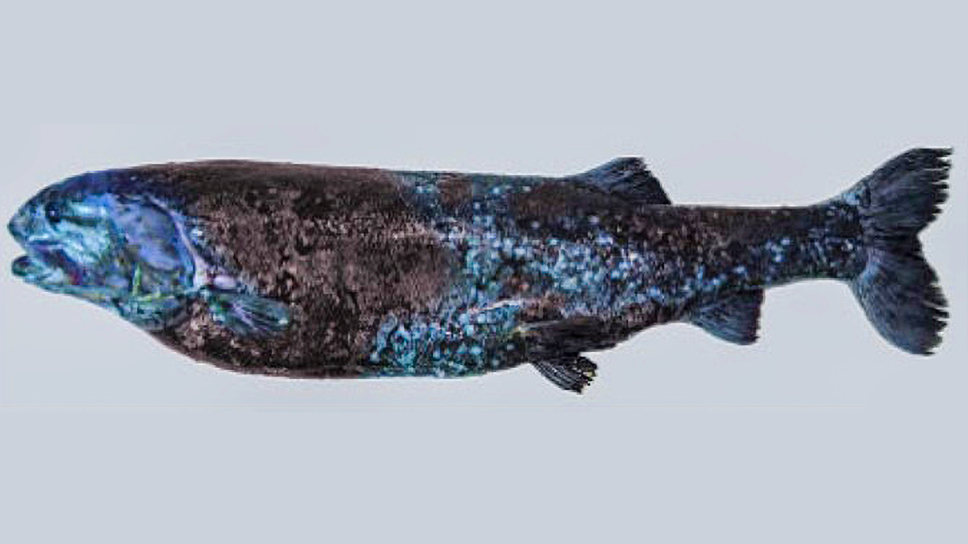 VIDEO: Jaws-Some: Huge Predator Fish Found Living at Bottom of 3,000ft Deep Sea