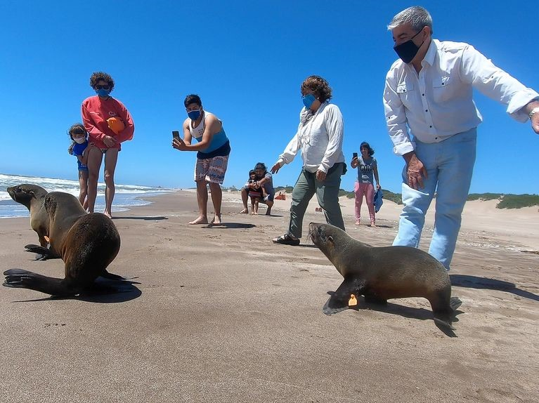 Seals,Sea Lions Suffer During Pandemic