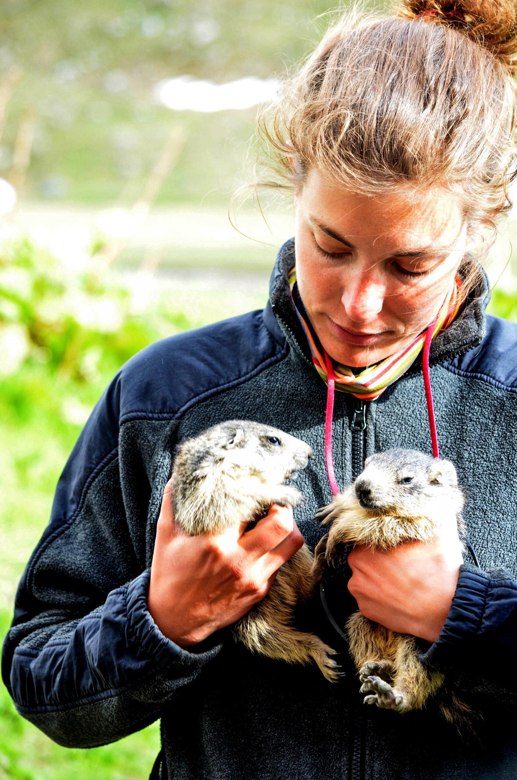 Experts Discover Marmots' Secret Family Language