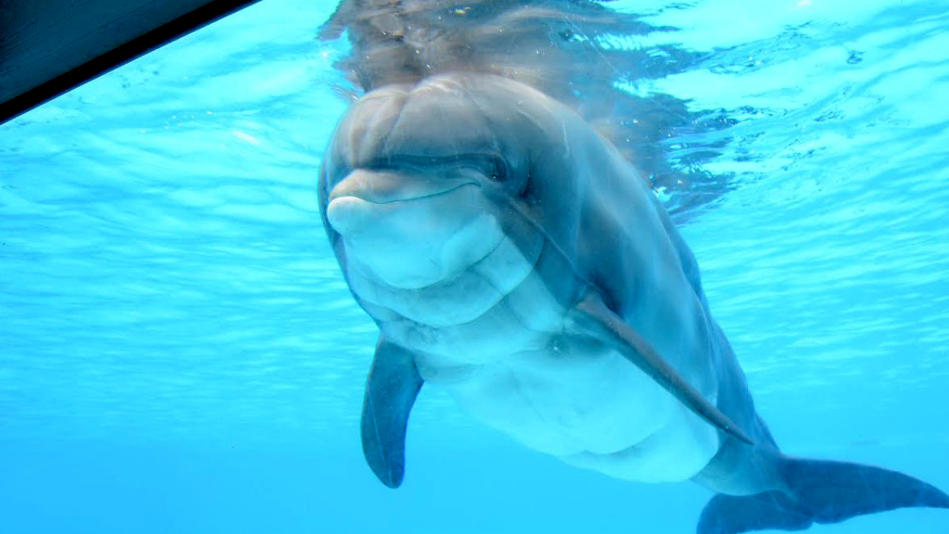 French Theme Park Euthanize Dolphin Against Norms, Animal Body Cries Foul Play