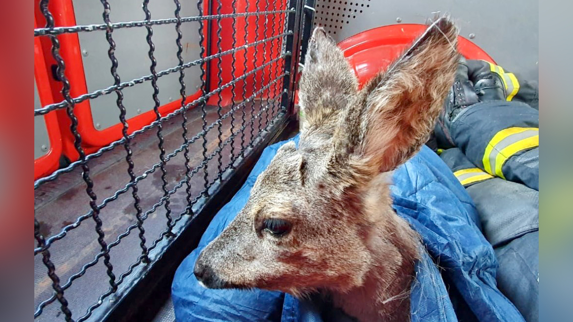German Firefighters Rescue A Deer And Heron In Emergency Operations