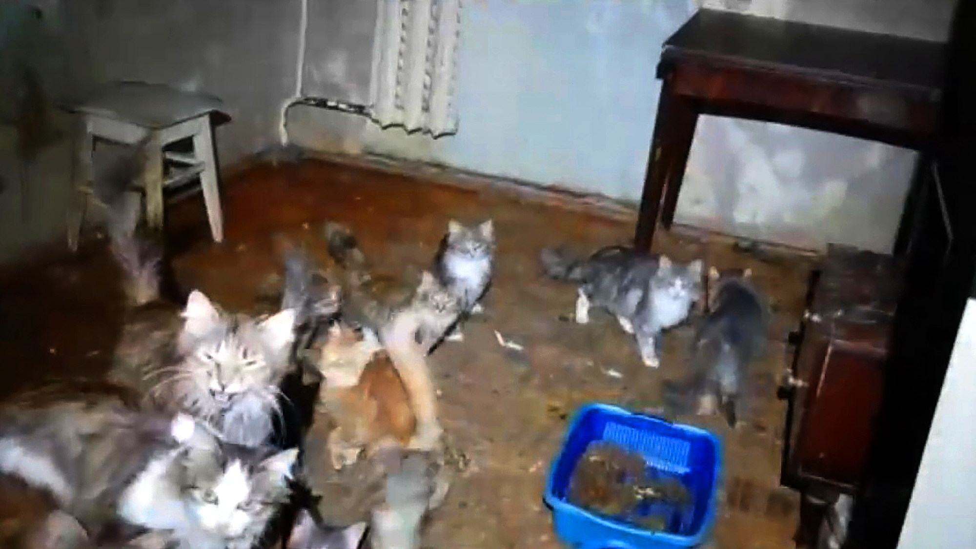 VIDEO: Get Me-Ow-Ta Here: Police Bid To Free 50 Cats Locked In Woman's Tiny Apartment