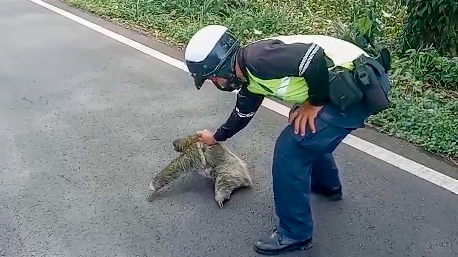VIDEO: A Cop Rescues Slow-Moving Sloth From Middle Of Road - Zenger News
