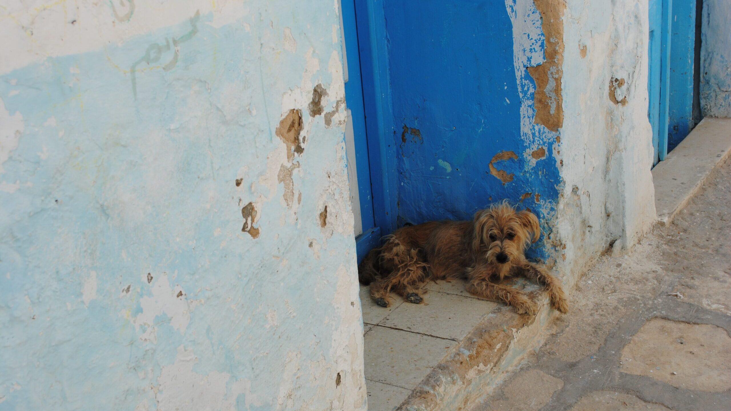 Salvados de la calle: Rescatan a animales en México
