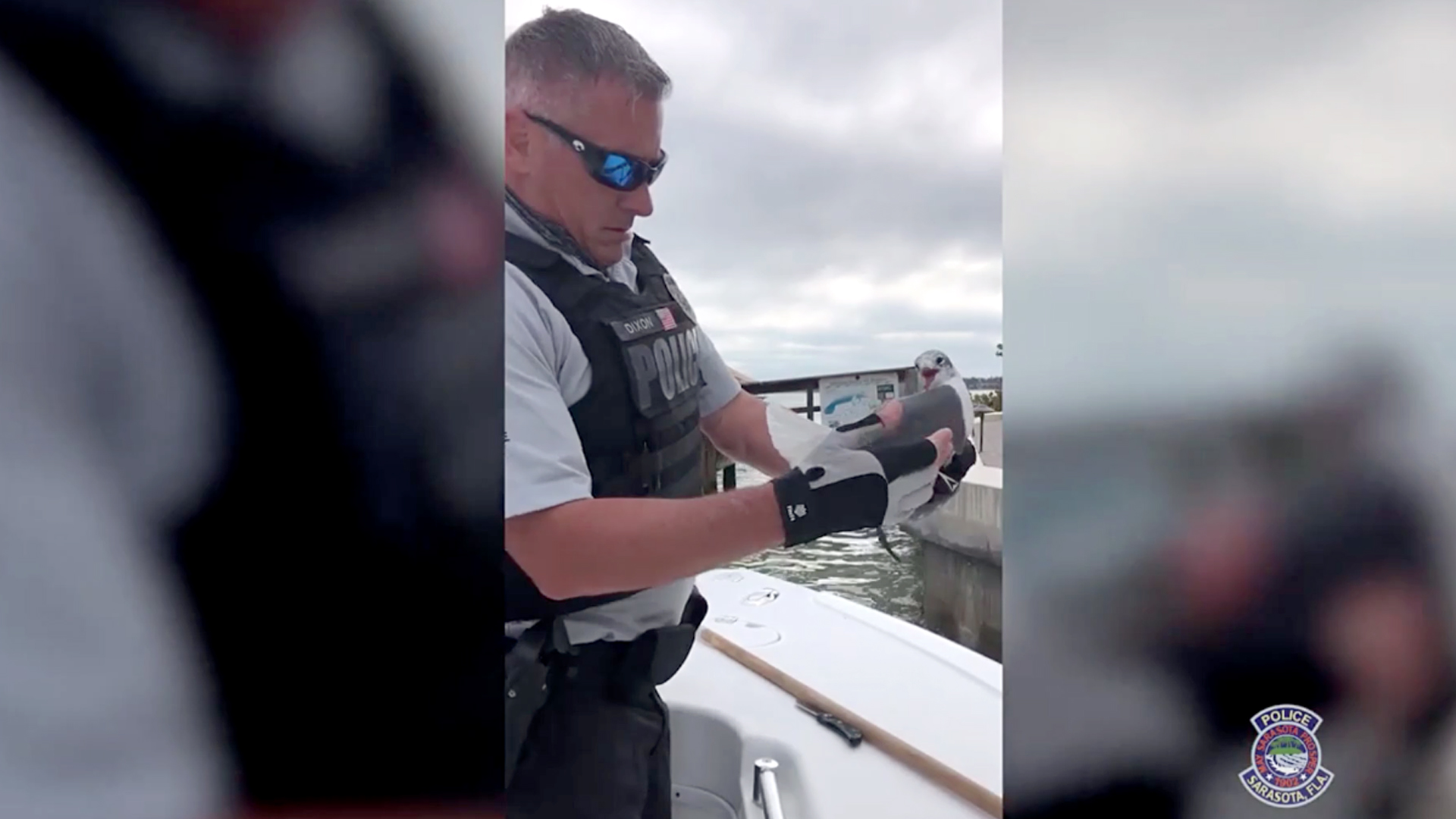VIDEO: Net Gull-ty: Cop Saves Trapped Gull With Fishing Net