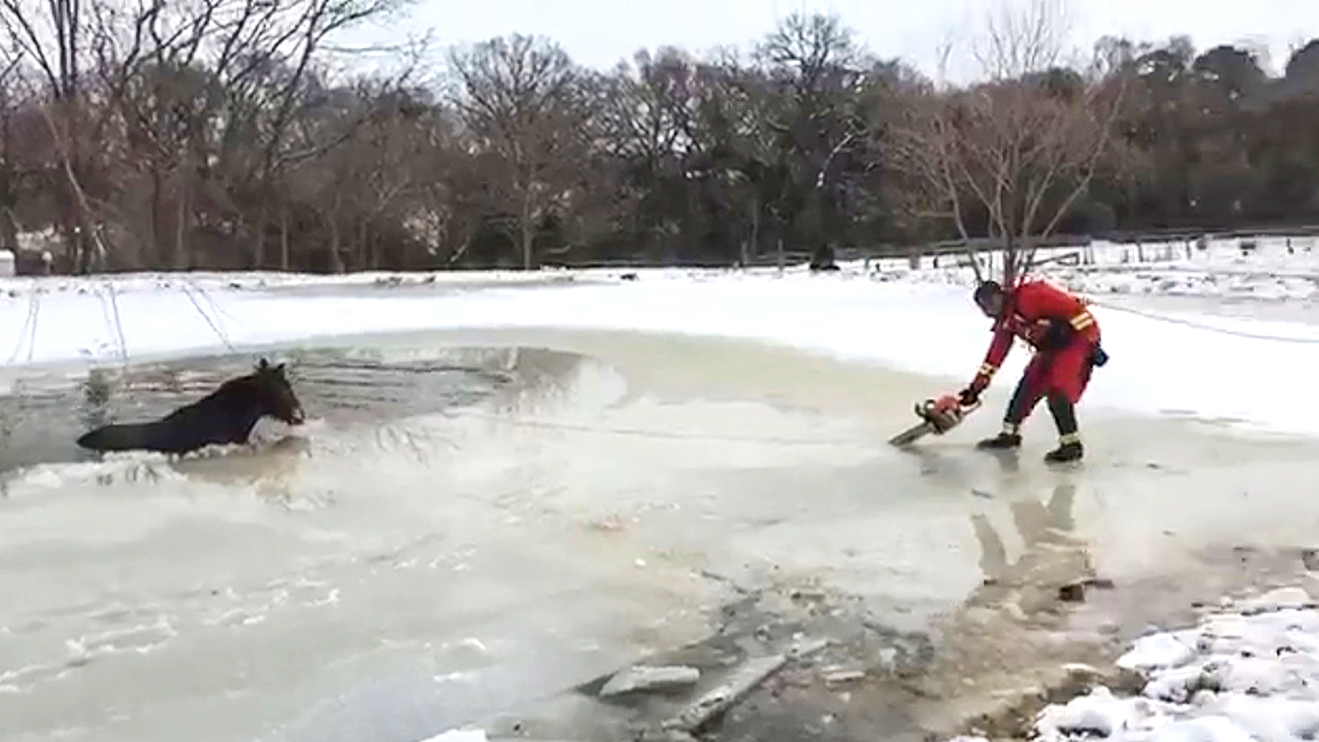 VIDEO: Texas Chainsaw Rescuer: Firefighter Saves Horse From Frozen Pond