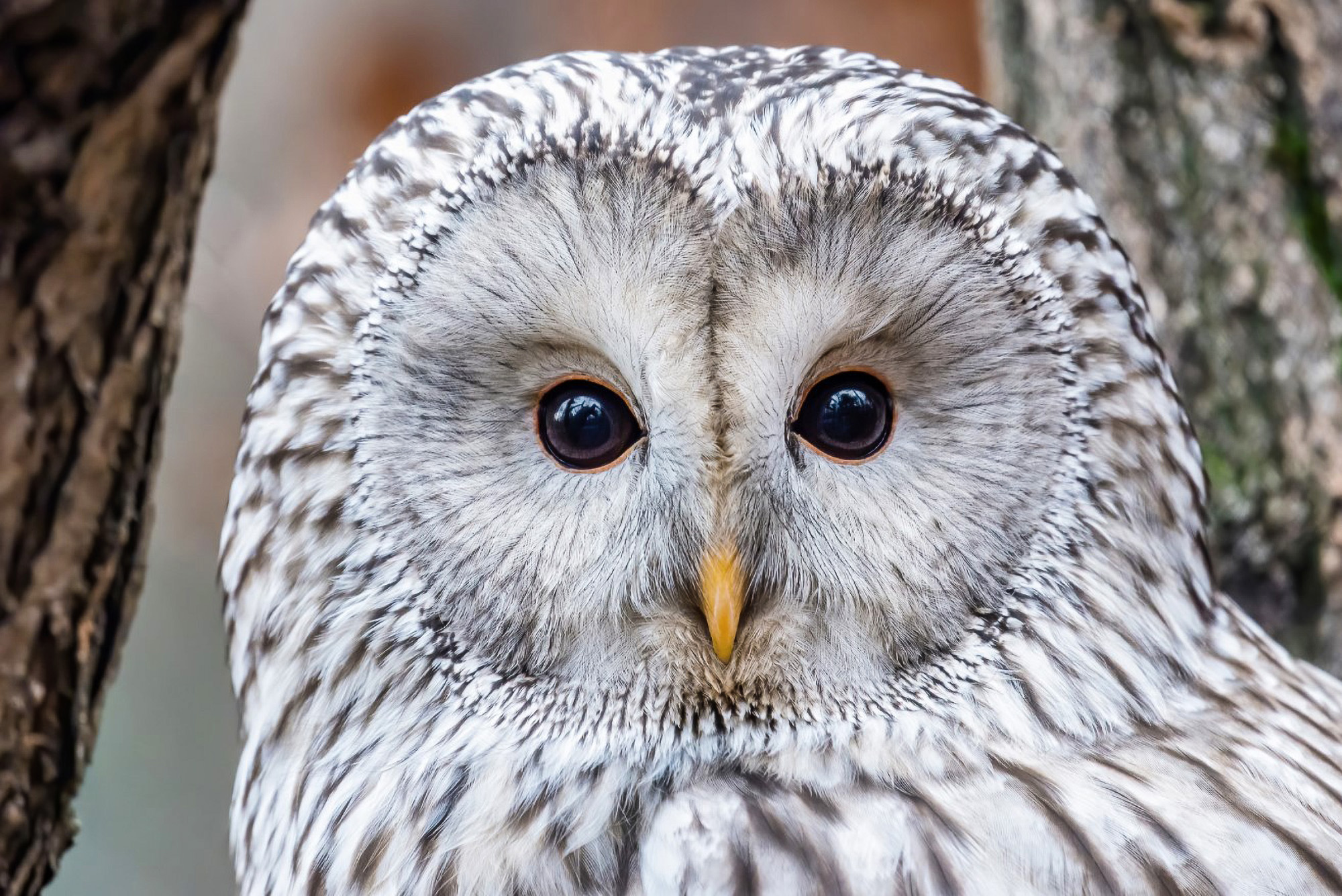 VIDEO: Rare Owl Doesn't Give Two Hoots That He's Supposed To Be Extinct