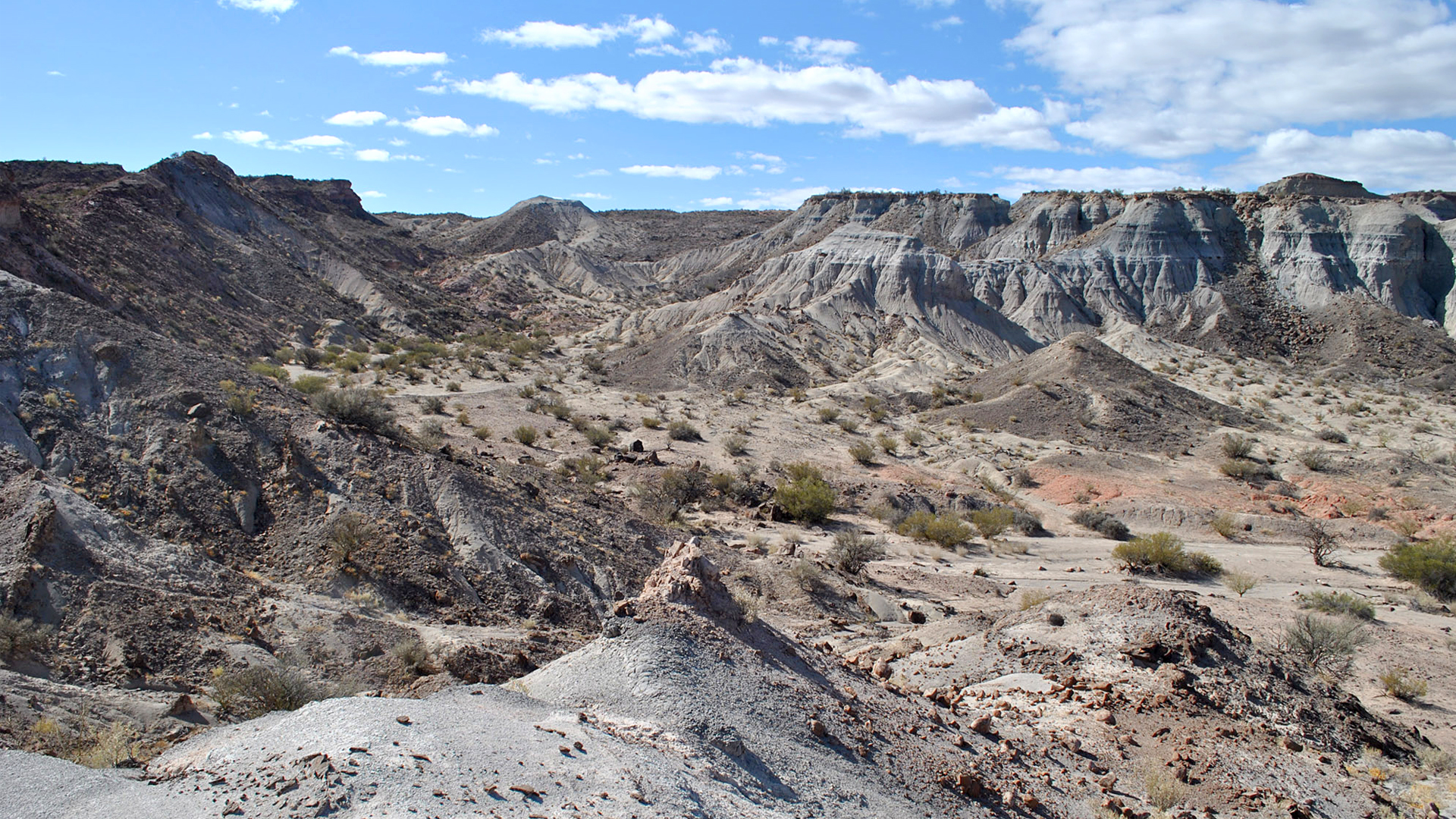 Archeologists Discover One Of The Oldest Unknown Species In Argentina