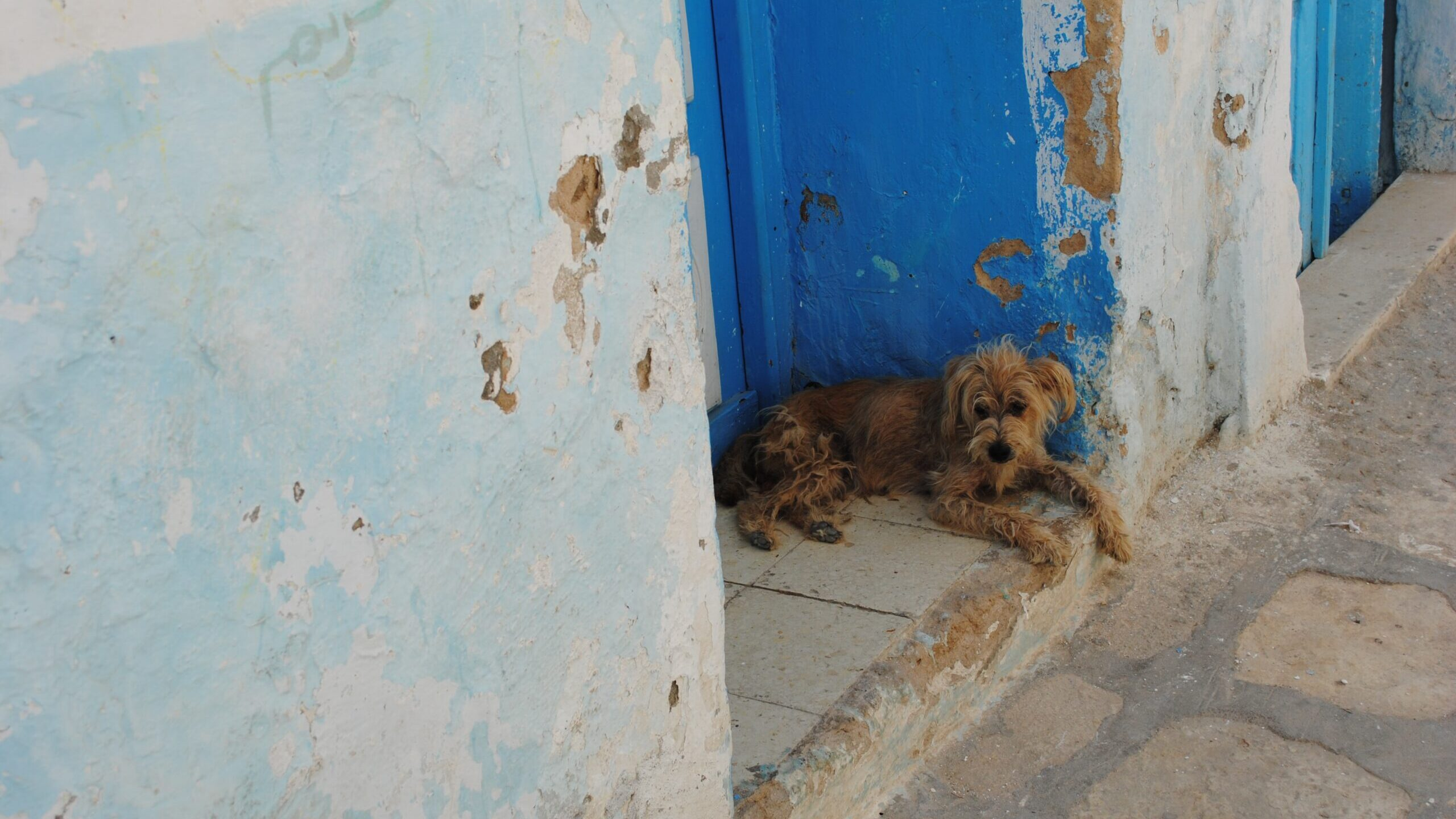 From The Streets To Our Homes: Animal Rescuers In Mexico