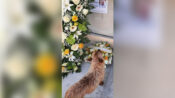 Loyal To The End: Dog's Amazing Trek To The Grave Of His Owner