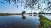 Central Indian Wetlands, A Home To Birds, Eyes Ramsar Tag