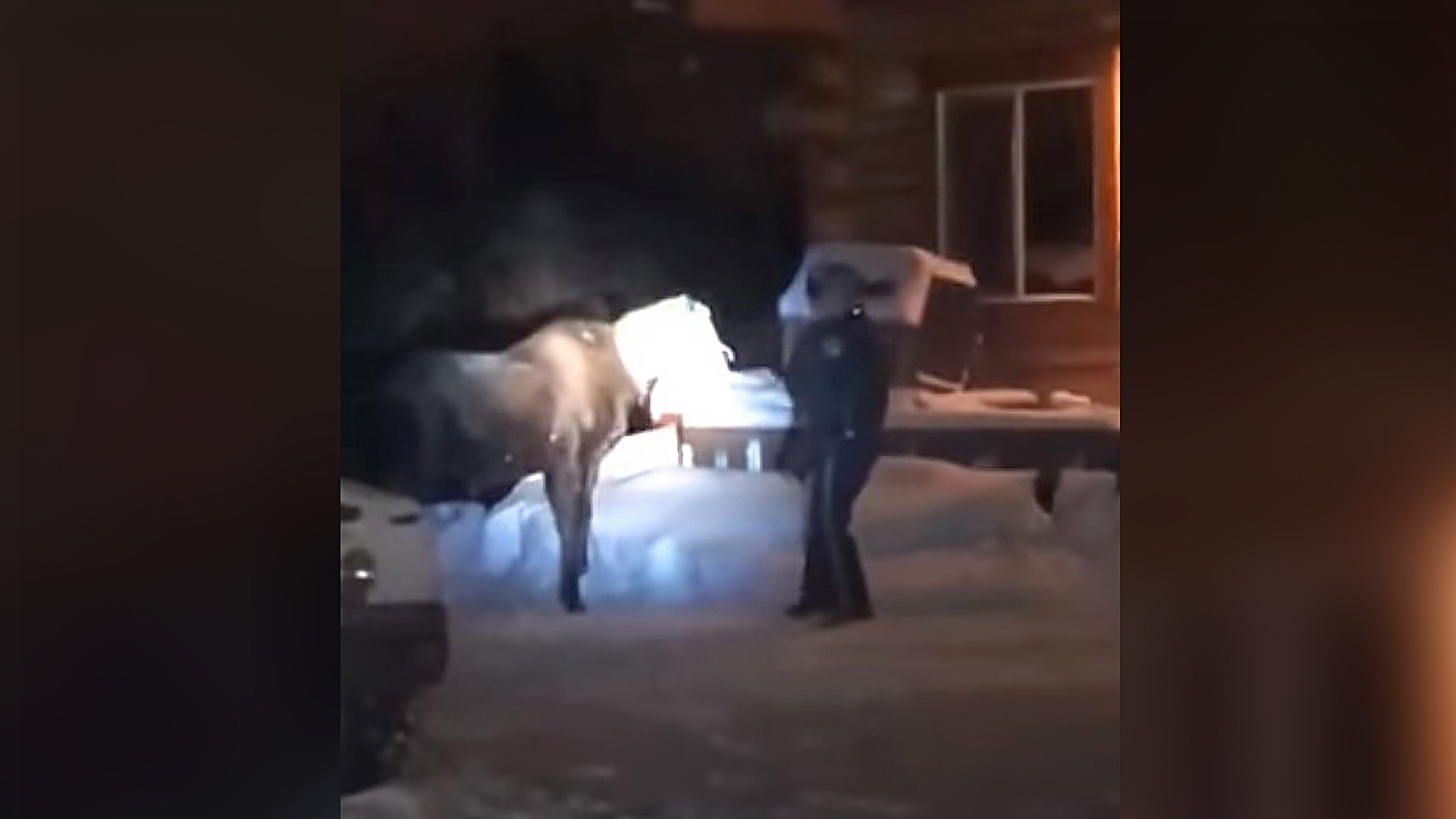 VIDEO: Trooper Rescues Young Moose With Bag Stuck On Its Head
