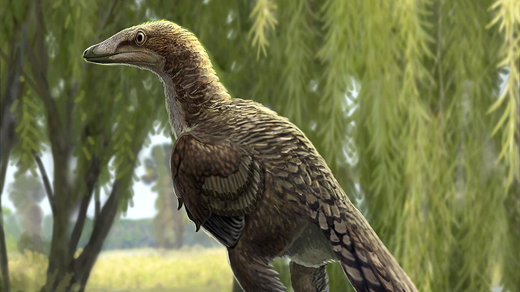 Scientists: Carnivorous 'Chicken Dinosaur' Roamed The Earth 66 Million Years Ago - Zenger News