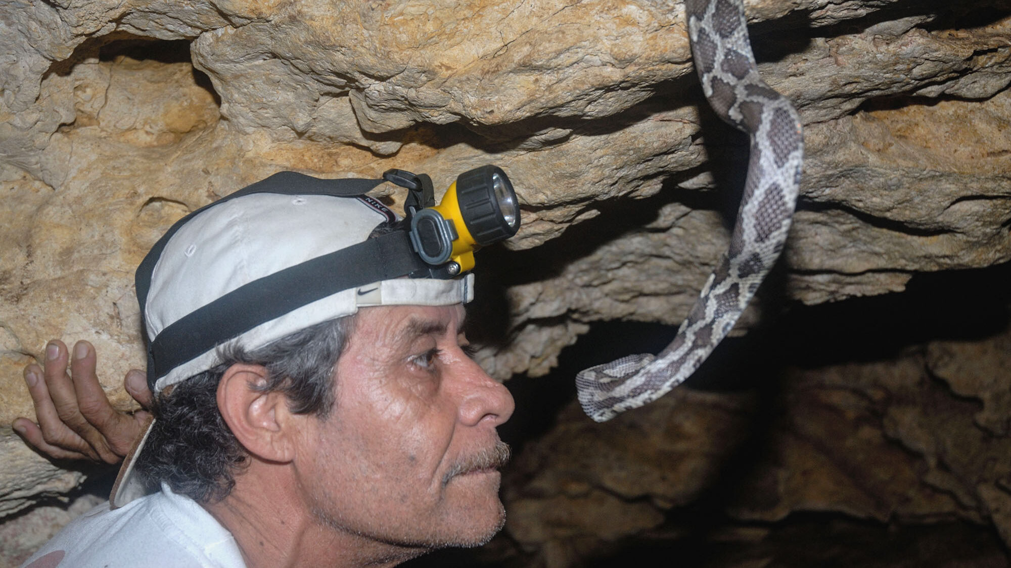VIDEO: Sight-Mare! The Blind And Deaf Snakes That Hunt Bats In A Pitch Black Cave