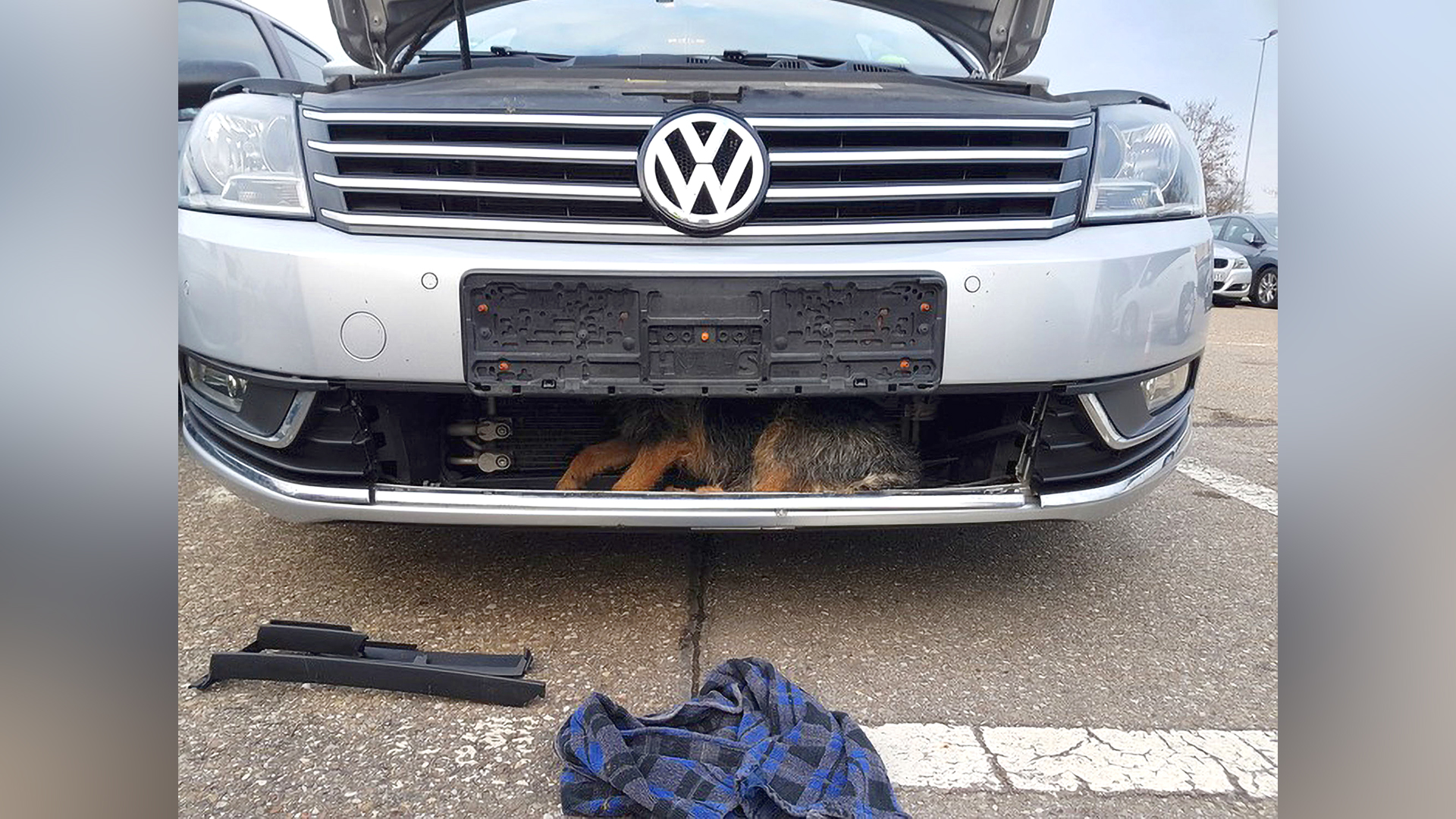 Your Car Running Wuff? Astonishing Survival Of A Dog Wedged In A Car Grill