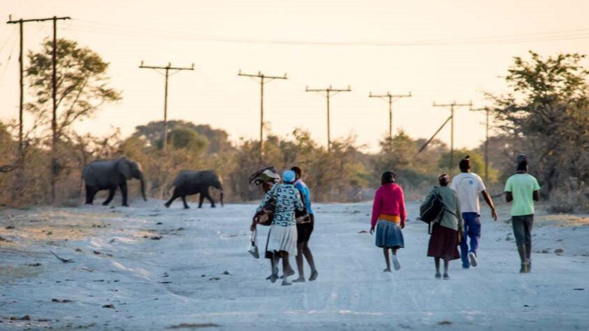 Human-Wildlife Conflict Scrutinized In Northern Botswana