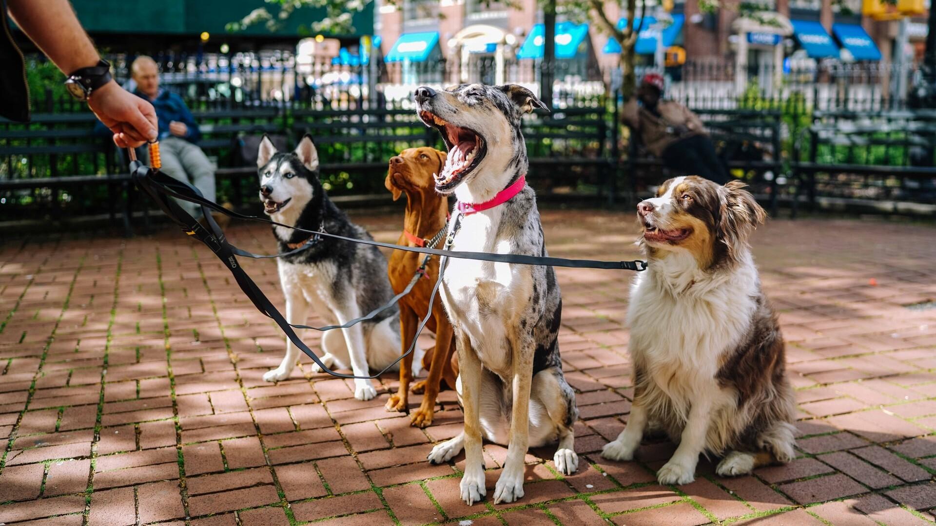 Smarter News Quiz: Puppies, Bunnies And Flocks Of Birds
