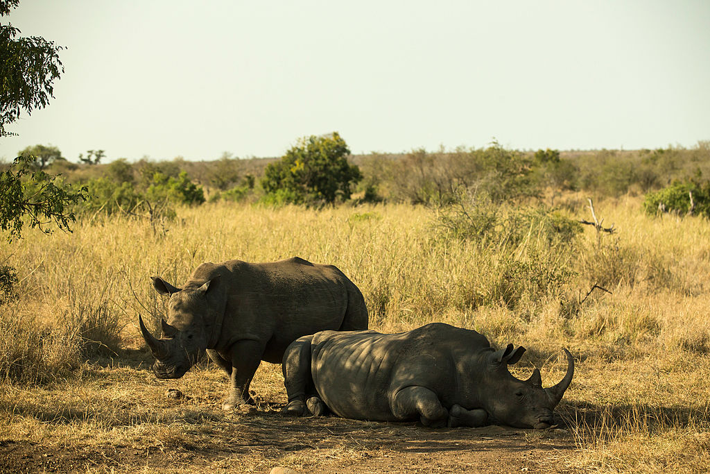 Ex-President Blasts Botswana's Leaders For Failing To Protect Rhinos