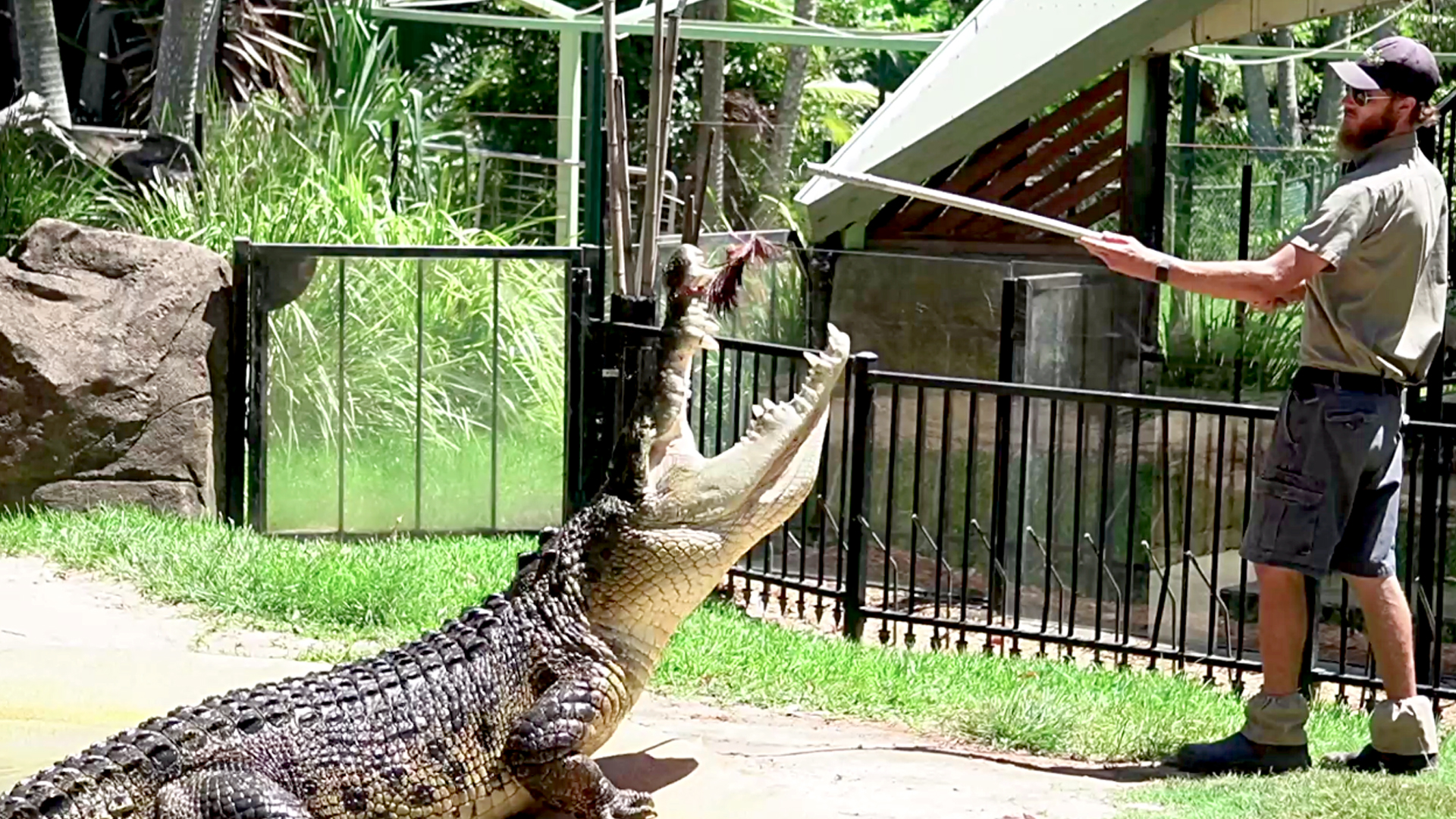VIDEO: Shrek-ed It: Monster Croc Named After Movie Ogre's Terrifying Mealtime