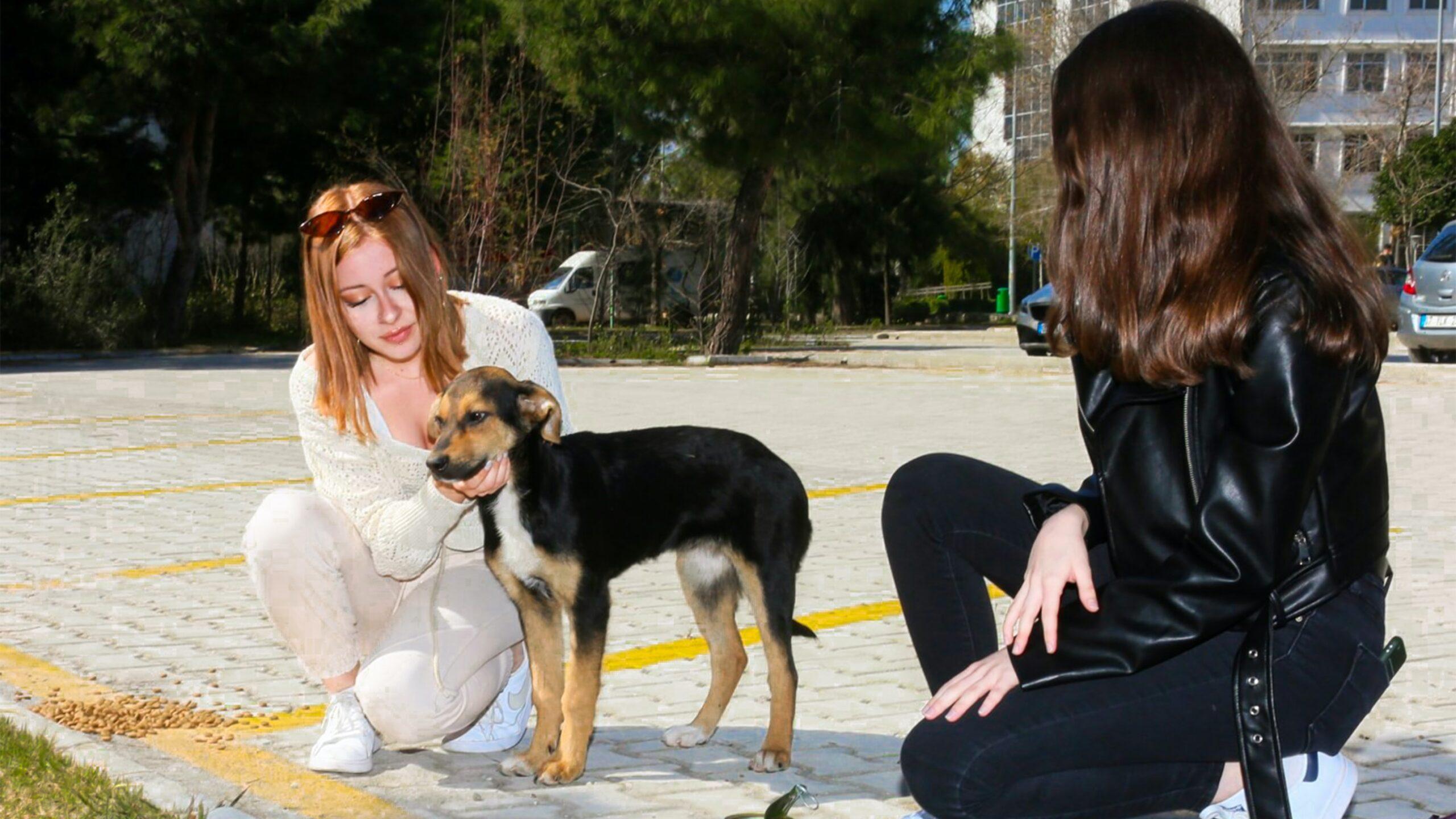 Croquetón ayuda a perros y gatos abandonados por miedo