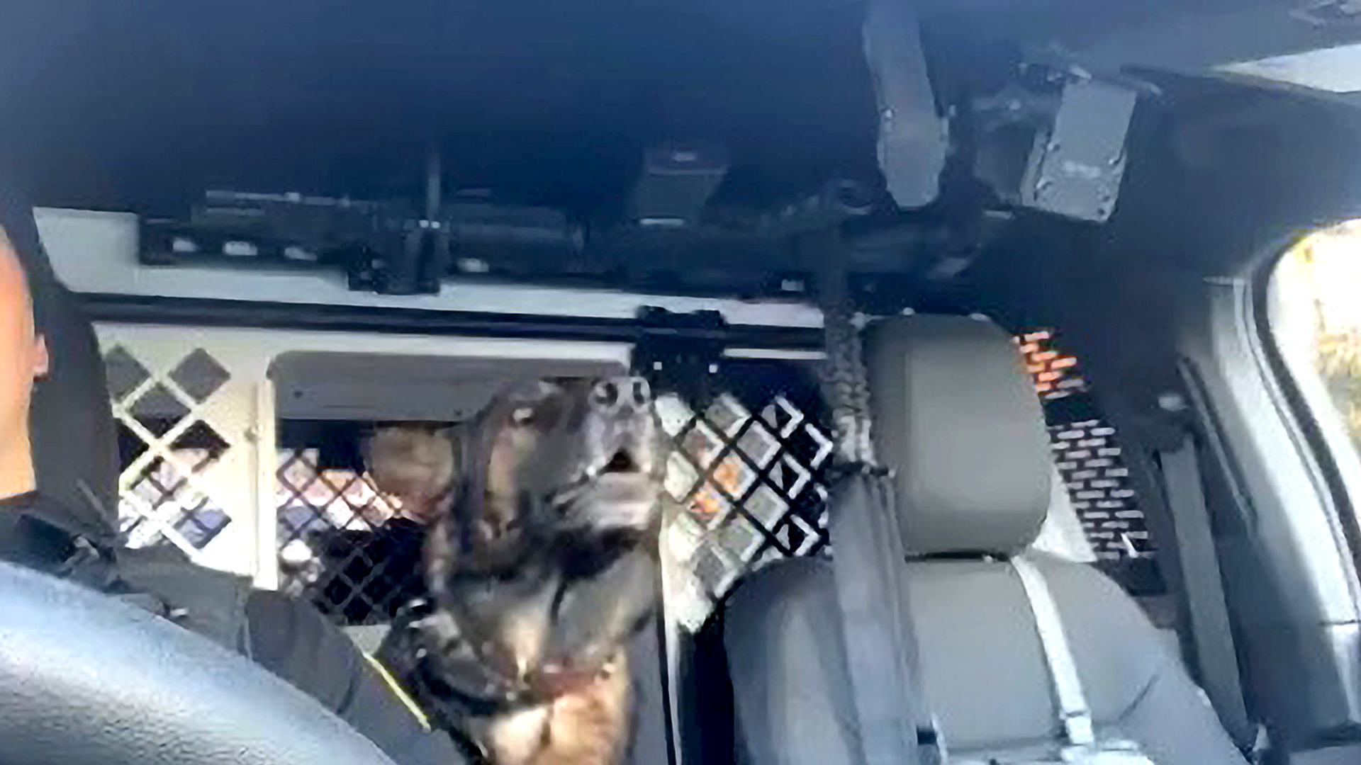 VIDEO: Snooper Dog: Police Sniffer Hound Sings Along To Country Tune In Patrol Car