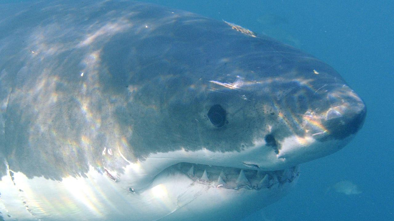 Mystery Gas Leak Hit South Australia Shark Plane Crew