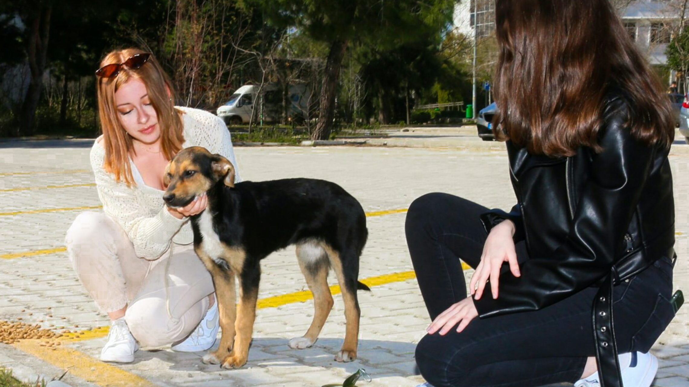 Croquetón: The Event That Seeks To Help Pets Abandoned Out Of Fear