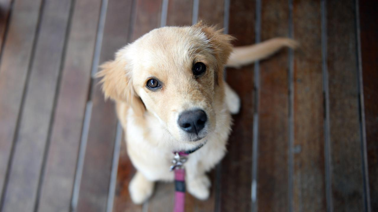 Australian State To Protect Pets Of Domestic Violence Victims