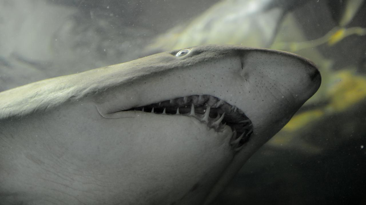 Modeling Backs Use Of Shark Deterrents To Save Australians