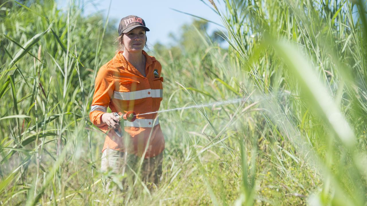 Top End in Australia Ramps Up war On Invasive Grass