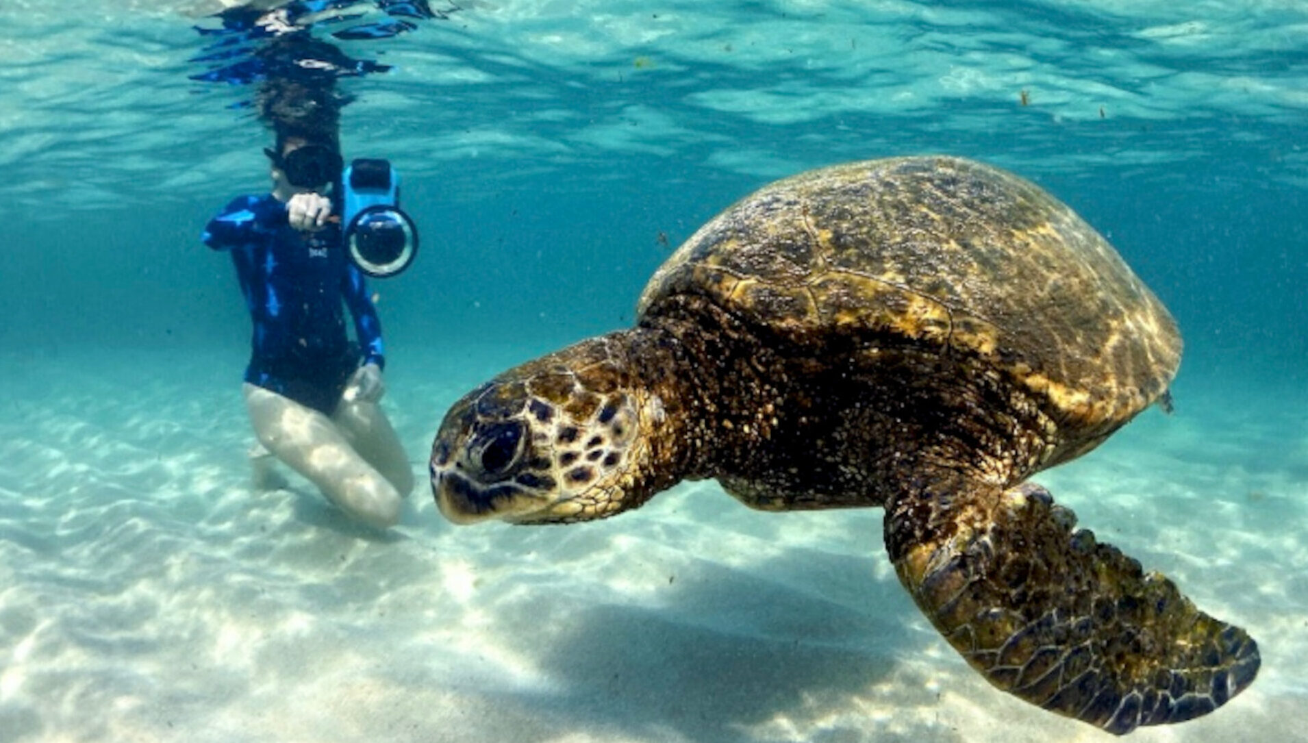 VIDEO: Shelly-Vision: Diver's Enchanting Ocean Footage Of Endangered Green Turtle
