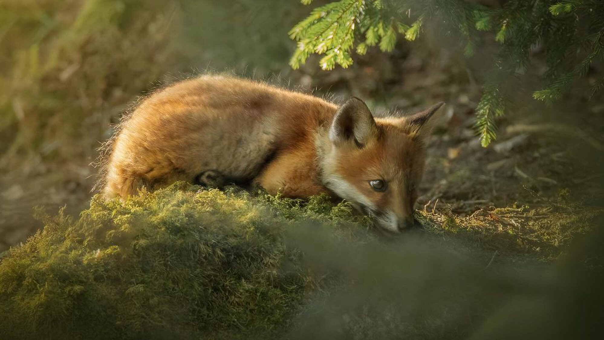 VIDEO: Eye For Nature: Photographer Captures Elusive Wildlife In Stunning Images