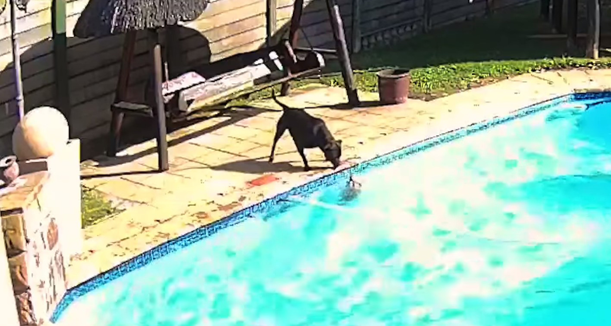 VIDEO Worth Watching:  Dog Rescues Dog