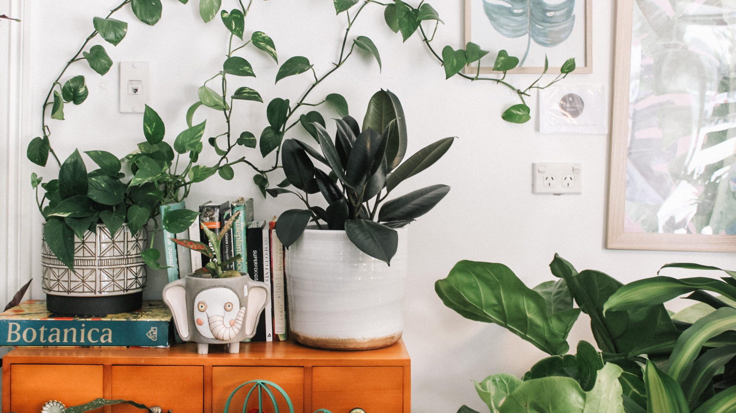 Las plantas dan el toque especial al hogar