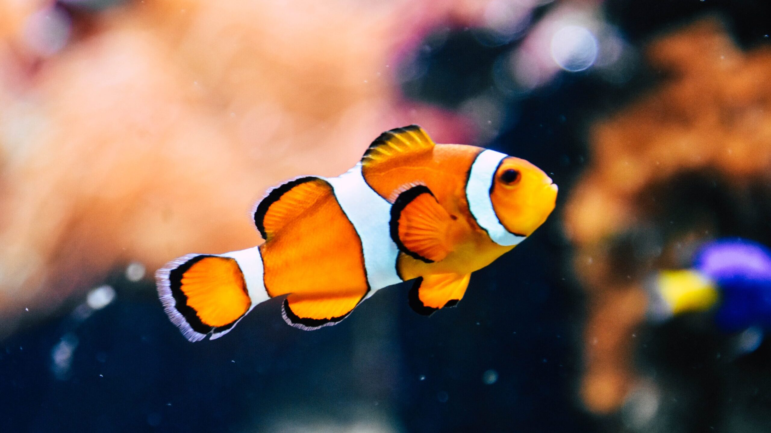 Fish Make Ideal Pets, Helpful In Relieving Their Owners' Stress