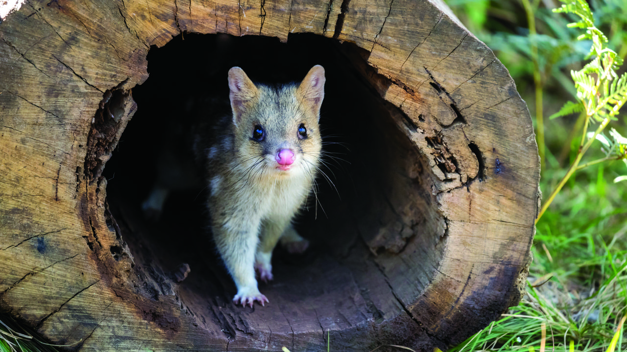 Six Eastern Australian Habitats Crucial To Prevent Species Extinction: Report