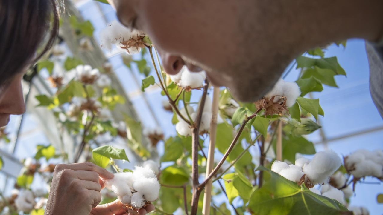 Unirrigated Cotton Industry Booming In This Australian State