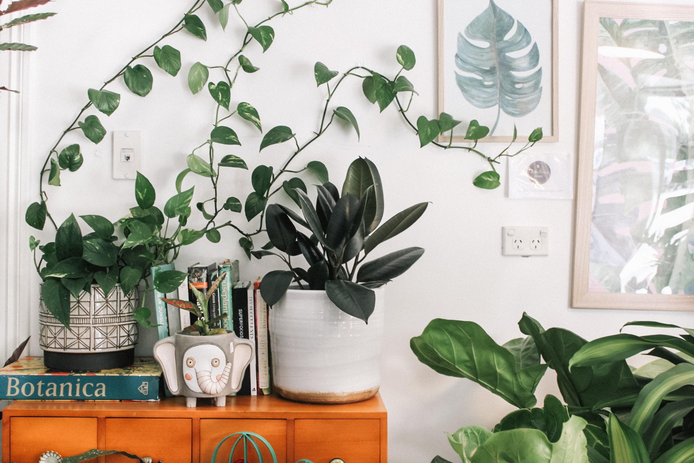Plants: The Natural Interior Decoration