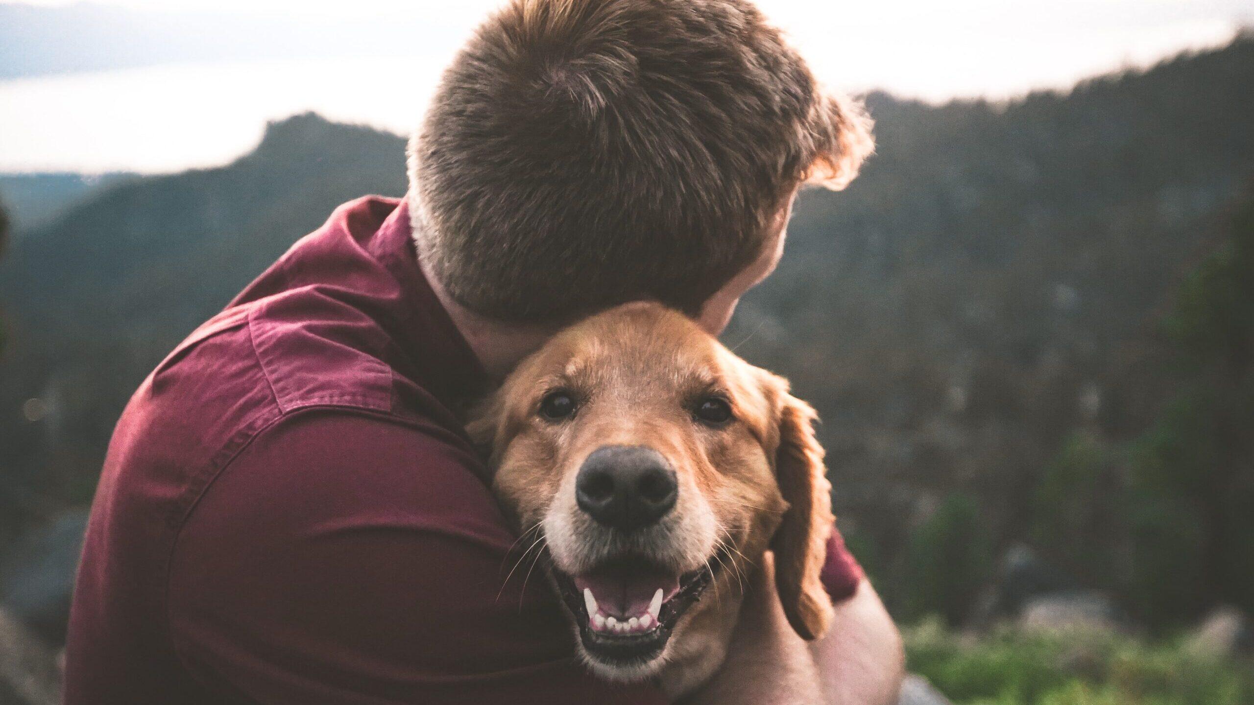 Perder al mejor amigo: el duelo por una mascota es real