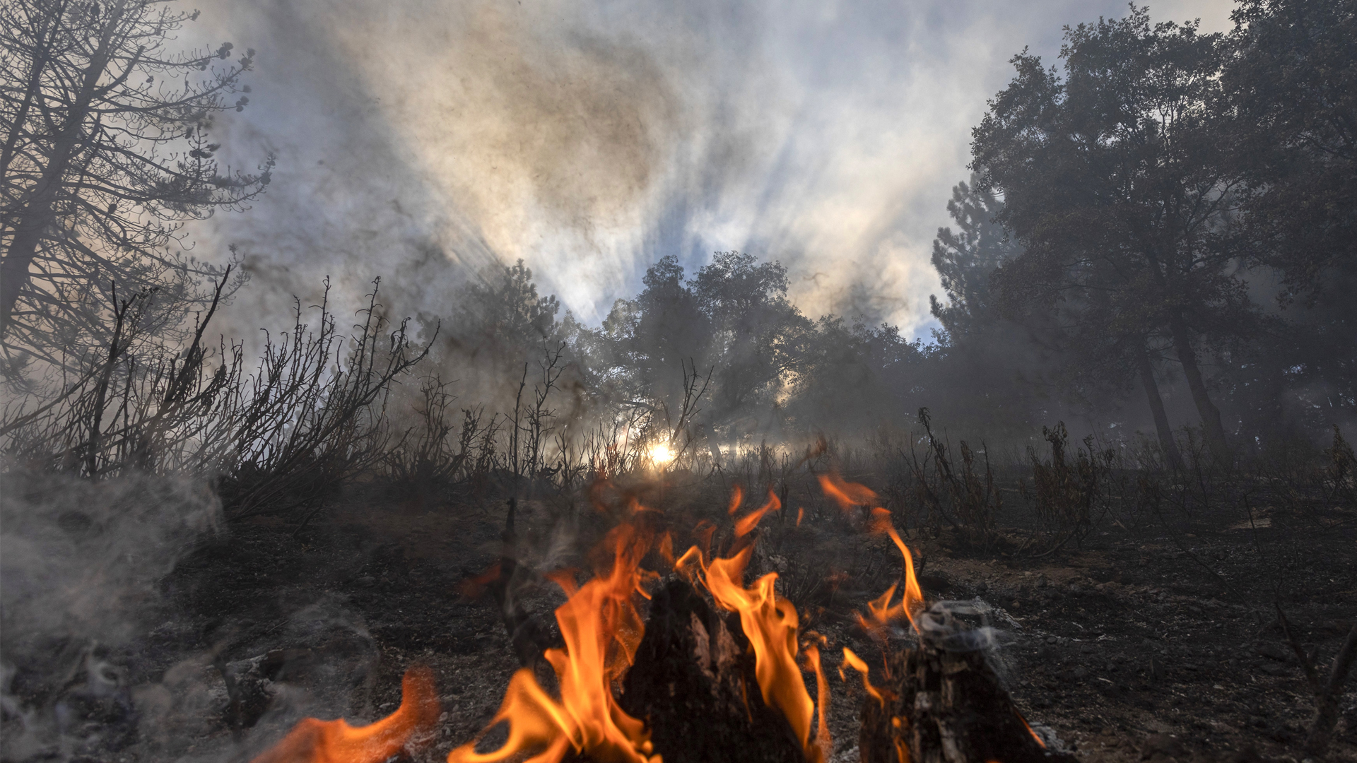 Climate Change Is Pushing A Surge In Forest Fires In India