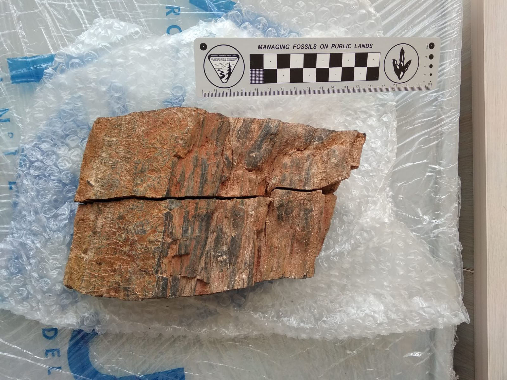 Treesy Come Treesy Go: Scientists Amazed As Stolen Cretaceous Trunk Is Returned 35 Years Later