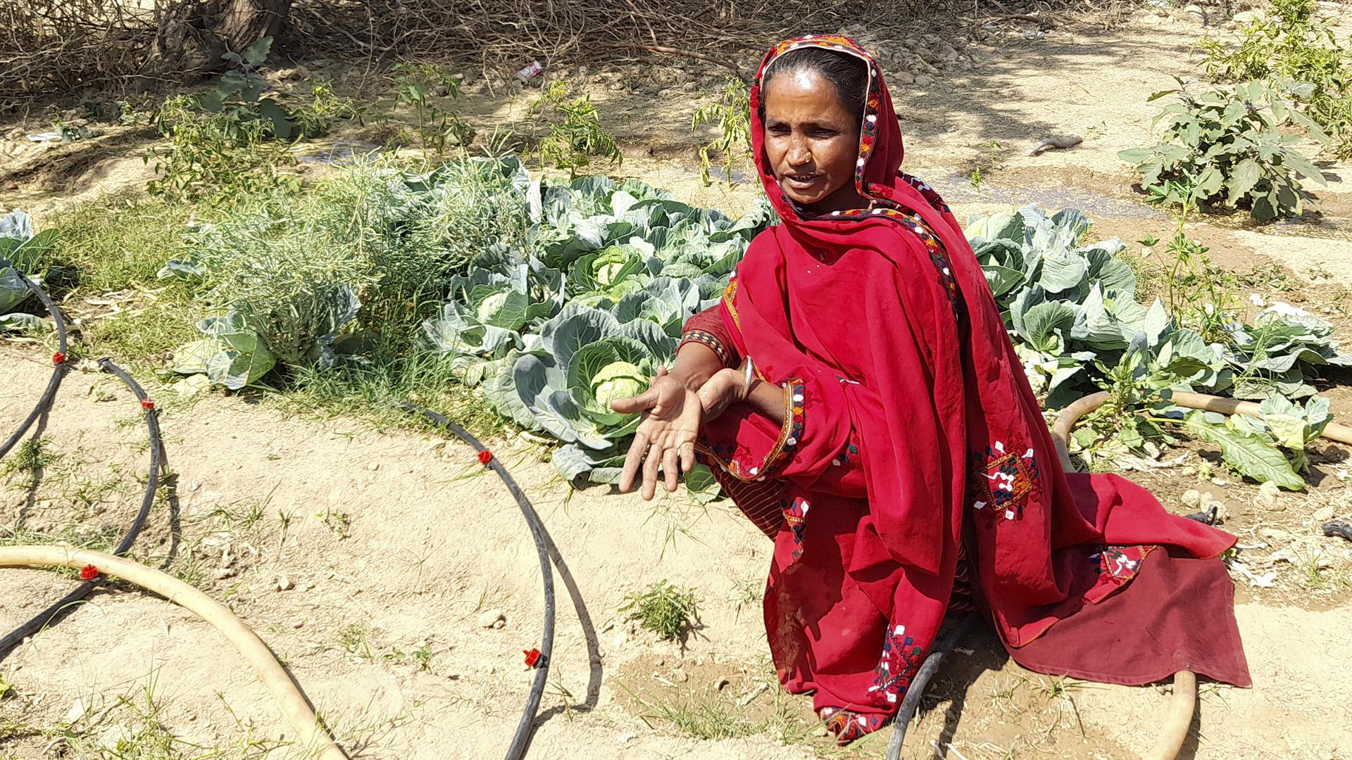 Women In Rural Pakistan Reap Kitchen Garden Advantage