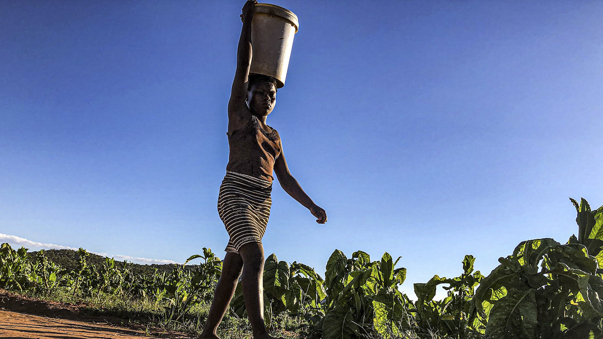 Seen But Not Counted: The Plight Of Immigrants In Zimbabwe