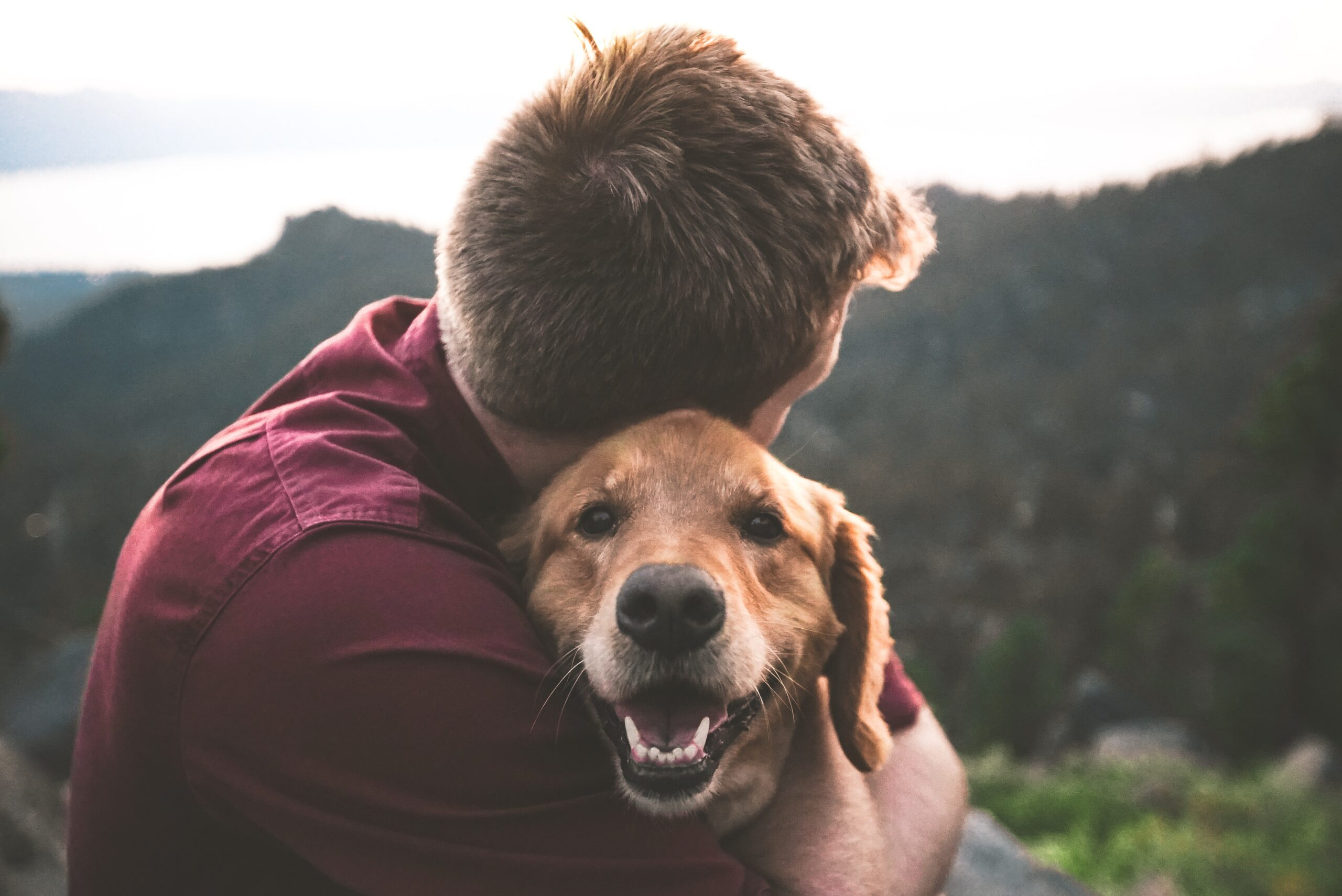 Losing Man's Best Friend: Overcoming Grief After The Death Of A Pet