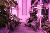 To Boldly Grow: NASA Researcher Farms Crops To Harvest On Missions To Mars And The Moon