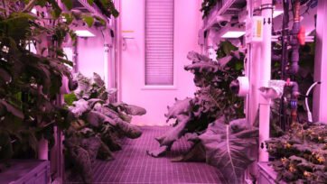 Kohlrabi (left) and broccoli grow at the EDEN ISS greenhouse in Antarctica. (DLR, NASA, Bunchek/Real Press)