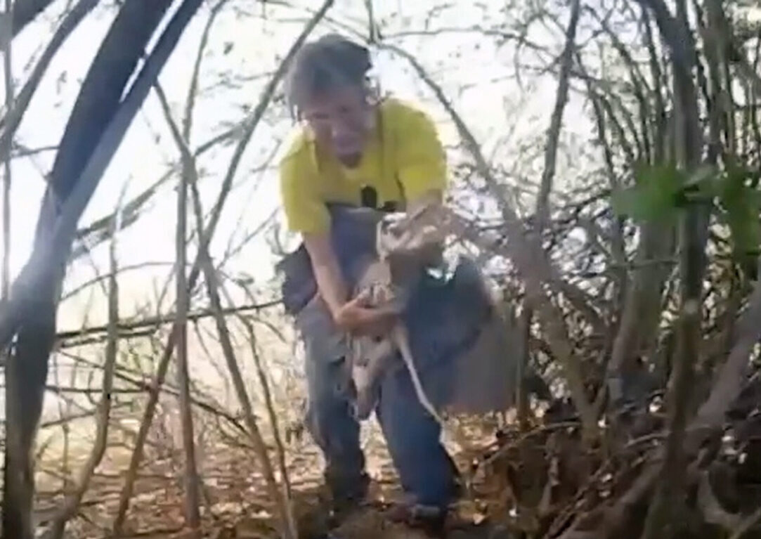 VIDEO: Heron's Above: Ungrateful Bird Tries To Bite Its Rescuers